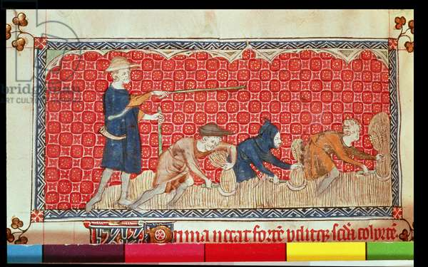 Roy 2 B VII f.78 Reaping corn harvest in August, from the Queen Mary Psalter, c.1310-20 (vellum)