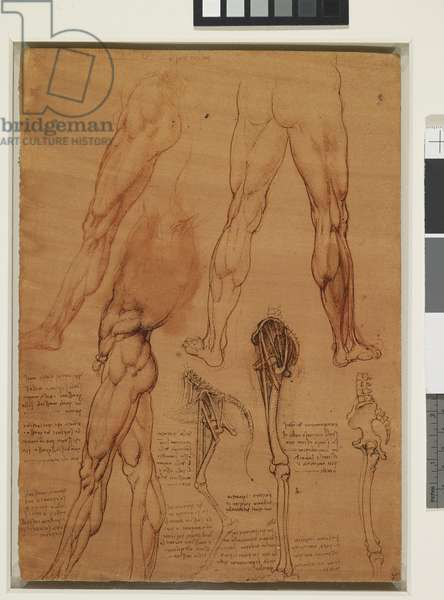 A comparison of the legs of a man and of a horse, c.1506-10 (pen & ink with red chalk on paper)