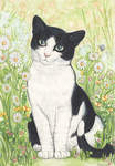 Black and White Cat with Daisies, 1995, (watercolour and pencil)