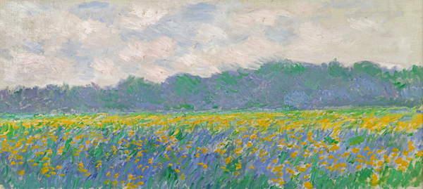 Field of Yellow Irises at Giverny, 1887 (oil on canvas), Monet, Claude (1840-1926) / French, Musee, Marmottan Monet, Paris, France, 45x100 cms, Champ d'Iris Jaunes à Giverny; iris; © Bridgeman Images