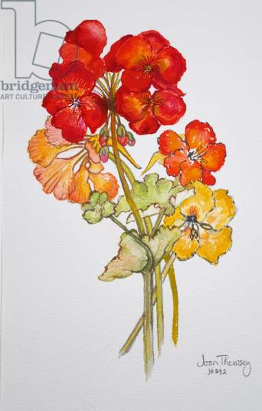 Geranium and Nasturtiums,2014,watercolour