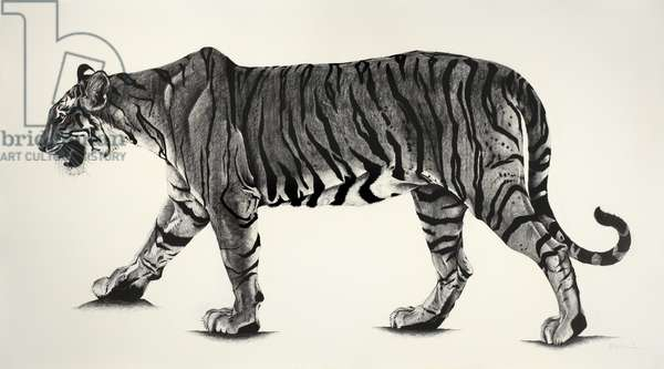 Large T19 from Ranthambhor, 2015, (Charcoal on paper)