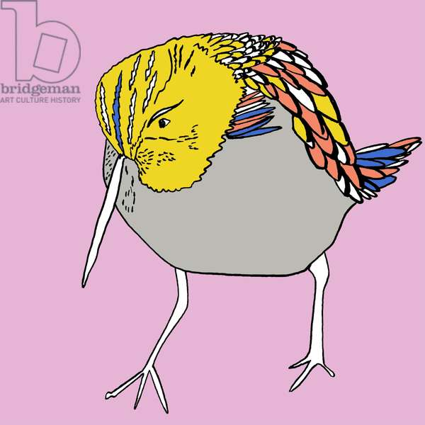 Dixie Dunlin, pen and ink, digitally coloured