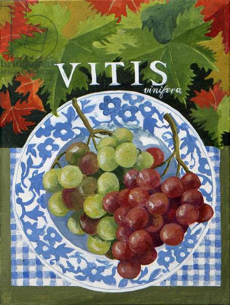 Vitus (grapes), 2014, (acrylic on canvas)