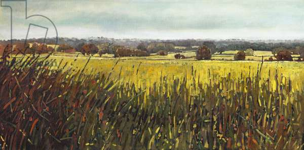 Towards Riseley, 2012, (oil on canvas)