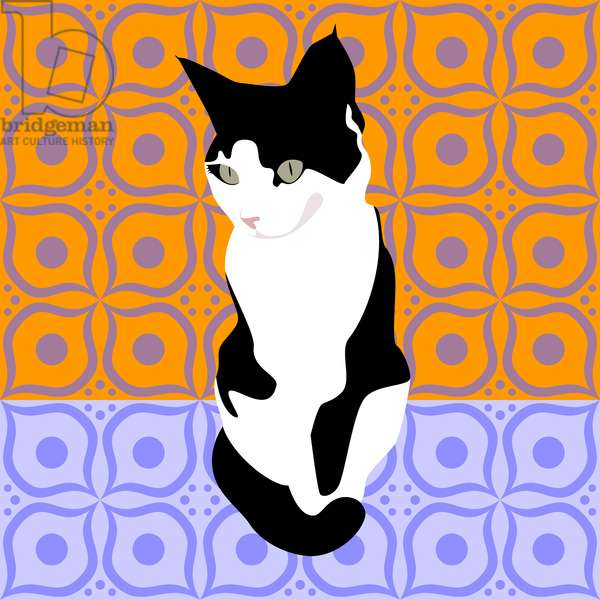 Cat on Morrocan Tiles
