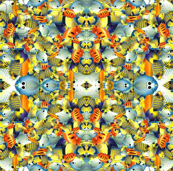 Kaleidoscope Fish Tile