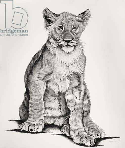 Lion Cub, 2011, (Charcoal on paper)