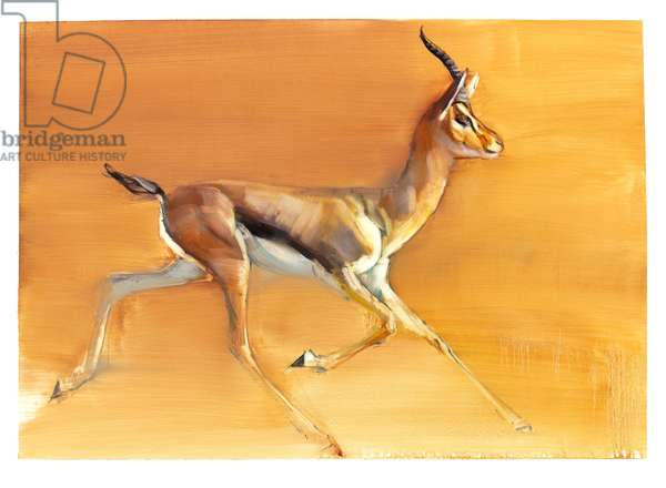 Arabian Gazelle, 2010 (oil on paper)