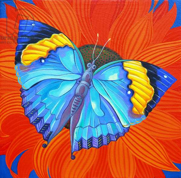 Indian Leaf Butterfly, 2014, (oil on canvas)