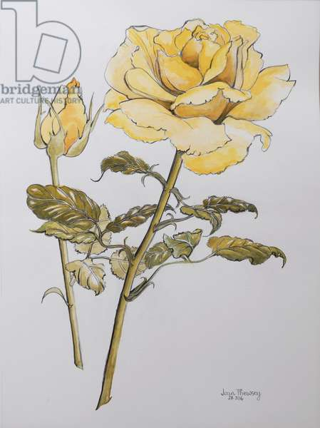 Yellow Rose with Leaves with Bud, 2012,pencil and (w/c on handmade paper) r