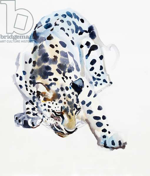 Arabian Leopard, 2008 (w/c on paper)