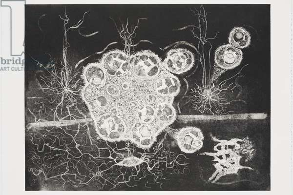 Birth of a Thought 3, 2007 (etching and aquatint)