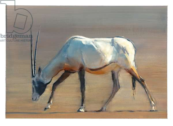 Arabian Oryx, 2010 (oil on paper)
