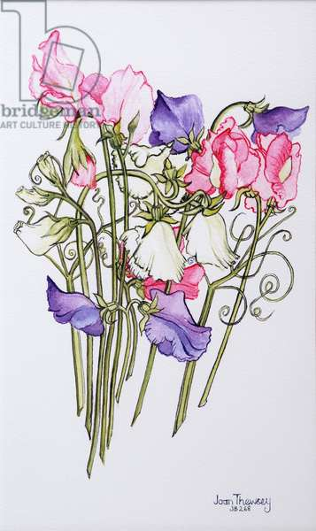 Ten Sweet Peas with Tendrils  2012 (w/c on paper)