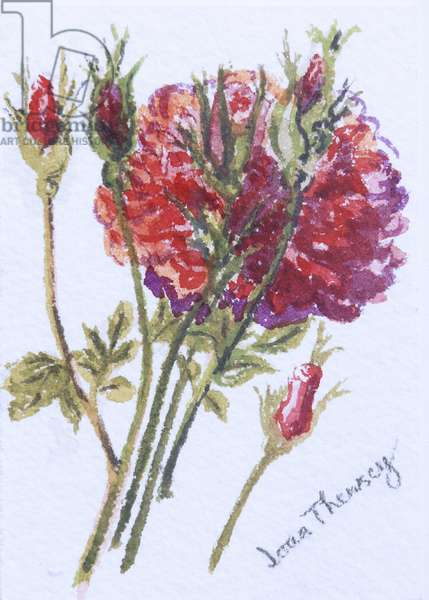 Little Red Roses, 2005, (w/c on handmade water colour board)