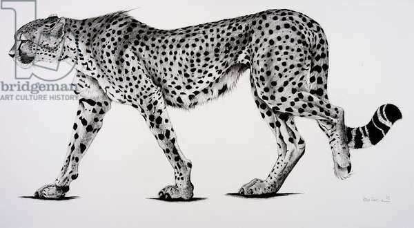Namib, 2004, (Charcoal on paper)
