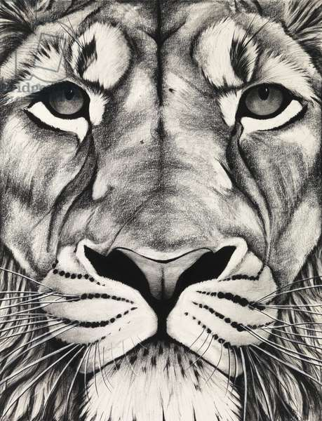 Lion close up, 2009, (charcoal on paper)