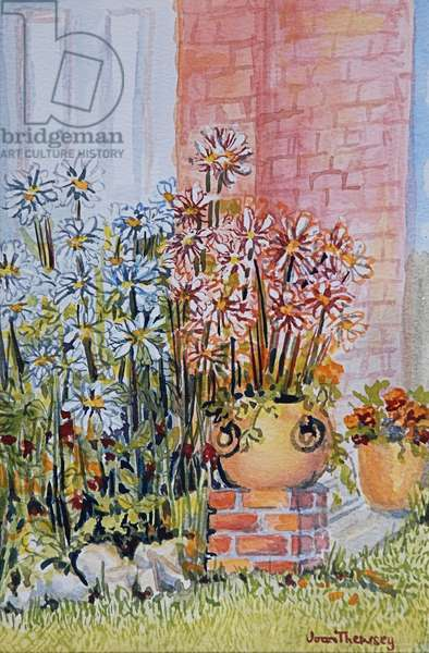 Marguerites in the Cottage Garden (w/c on paper)