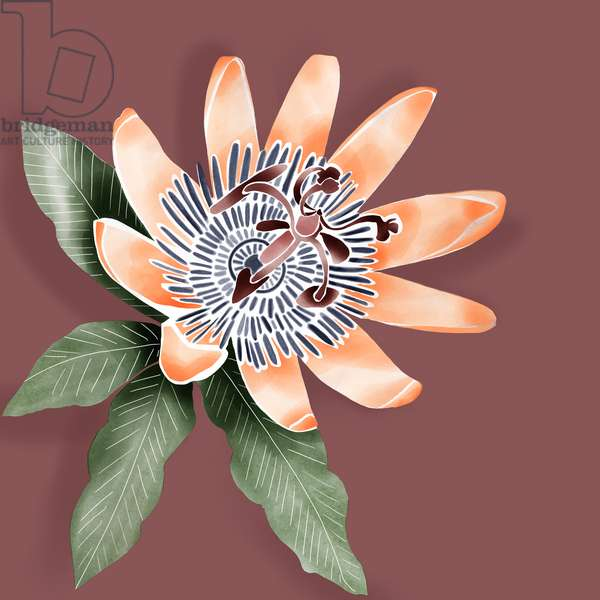 passiflora, 2019, digital
