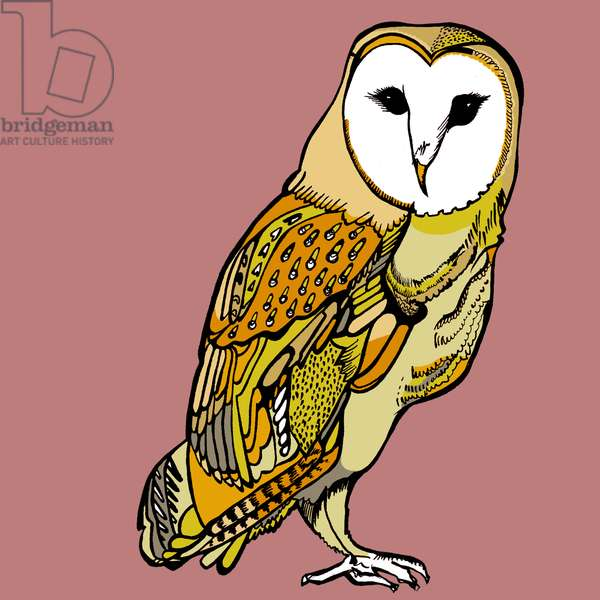 Beatrice Barn Owl, pen and ink, digitally coloured