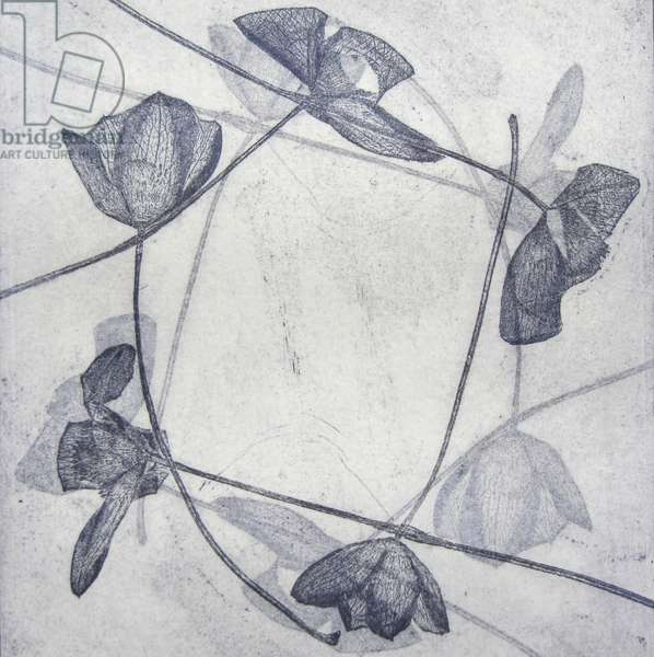 Clematis Montana, 2014 (etching)