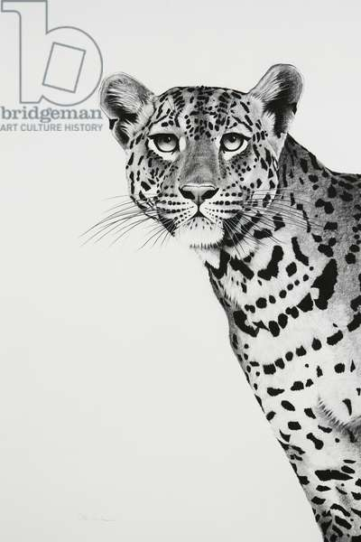 Leopard peering, 2018, charcoal on paper