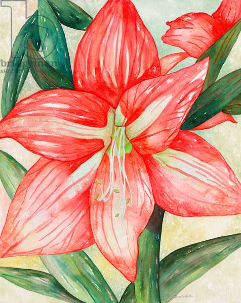 Amaryllis, 2005 (watercolor)