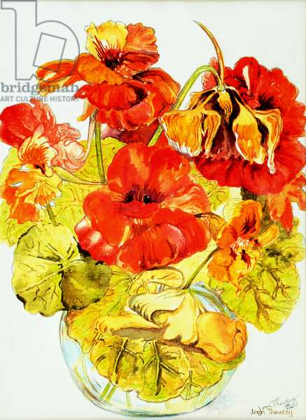 Nasturtiums,2005,(water colour)