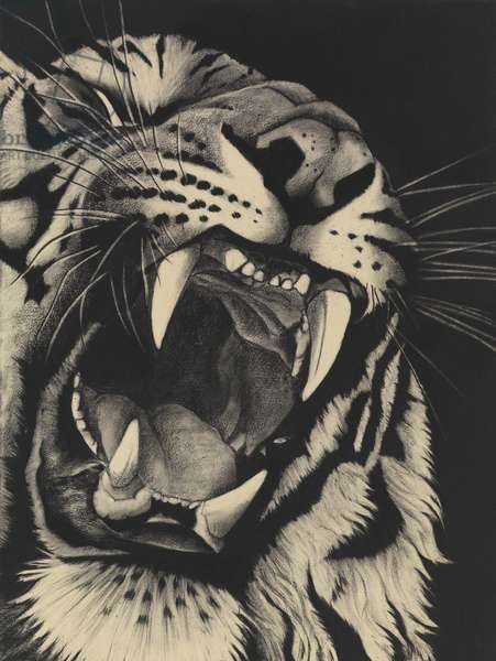 Detail of Snarling Tiger on Black, 2015, (Charcoal on paper)