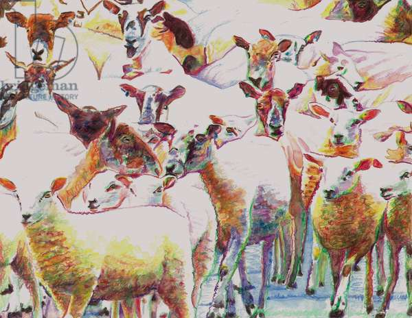 Flock, 2011, (coloured pencils on paper)