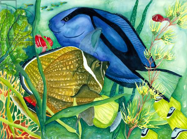 Blue Tang, 1998, (watercolor)