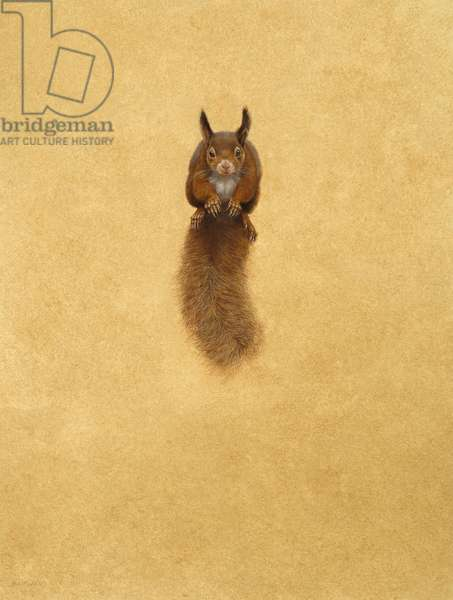 Leaping Red Squirrel -( watercolour & gouache on paper )