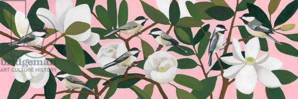 Chickadees on a Southern Magnolia