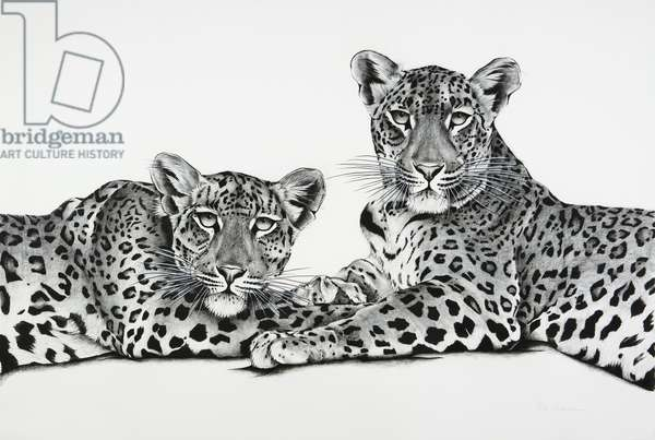 Jawai leopard mother and cub, 2018, charcoal on paper