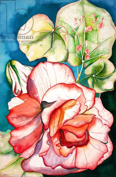 Begonia; 2006 (watercolor)