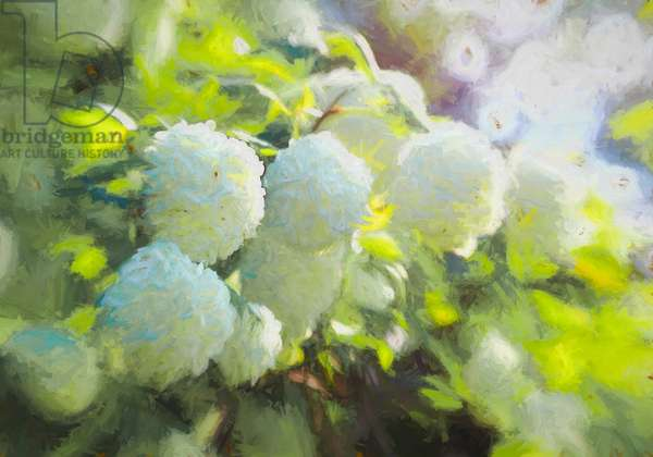 Softly Blooming, 2018, (painting)