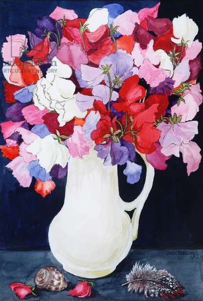 Sweet Peas in a White Jug with Shell and Feather  2011  (w/c on paper))