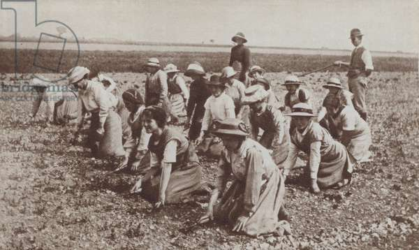 British land girls at work in the fields, World War I, 1916 (b/w photo)