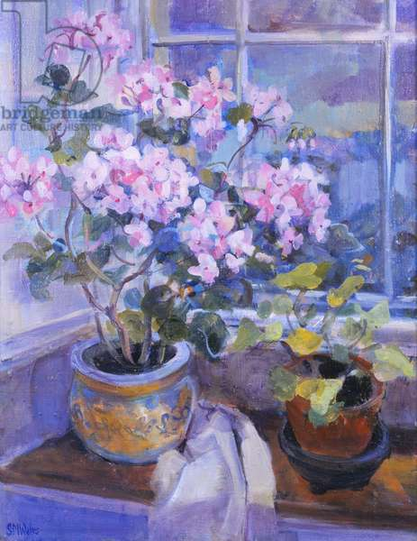 Pink geranium on window seat, 1996, (gouache on paper)
