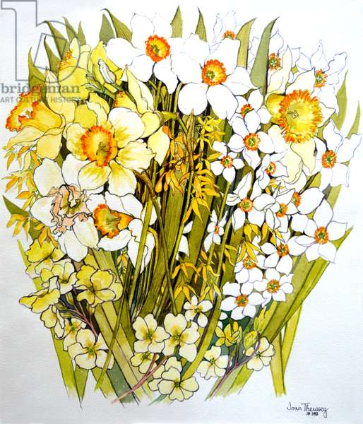 Daffodils, Narcissus, Forsythia and Primroses, 2000 (watercolour)