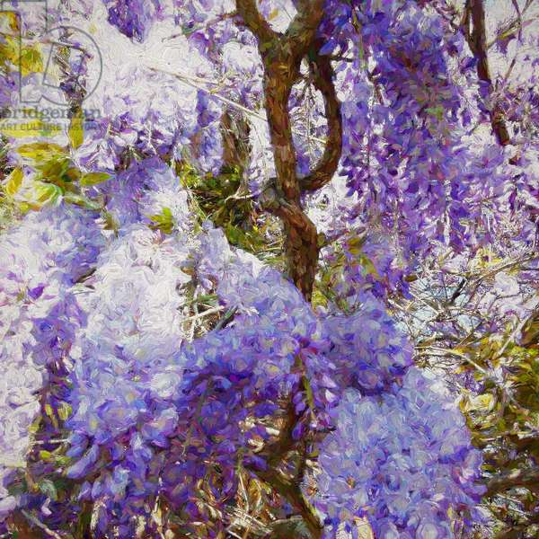 Wisteria, 2018, (mixed media)