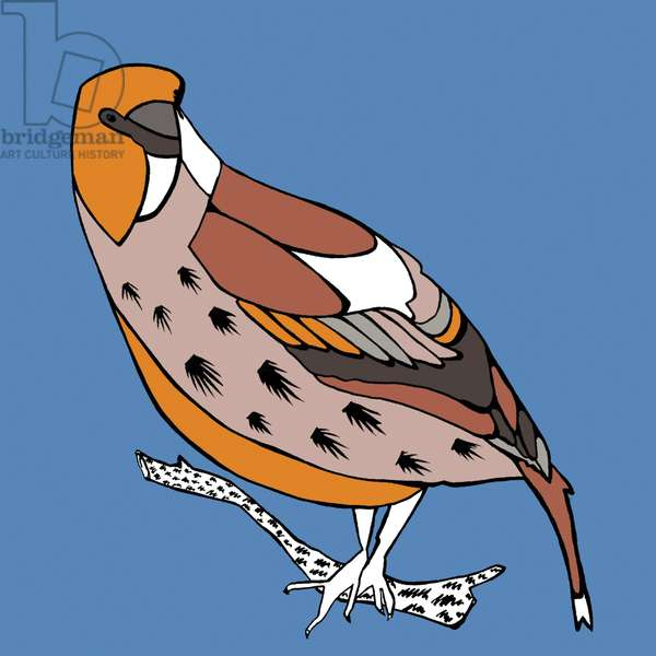 Harry Hawfinch, pen and ink, digitally coloured