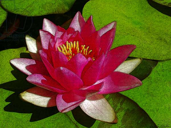 Waterlily, 2012, (mixed media/digital)