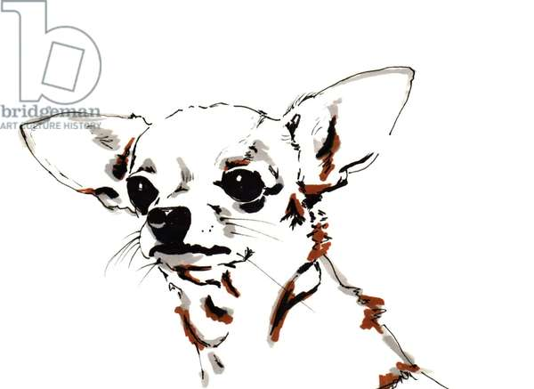 Big Ears the Chihuahua, 2012 (pen, ink on paper)