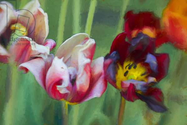 Bright Tulips, 2018, (painting)