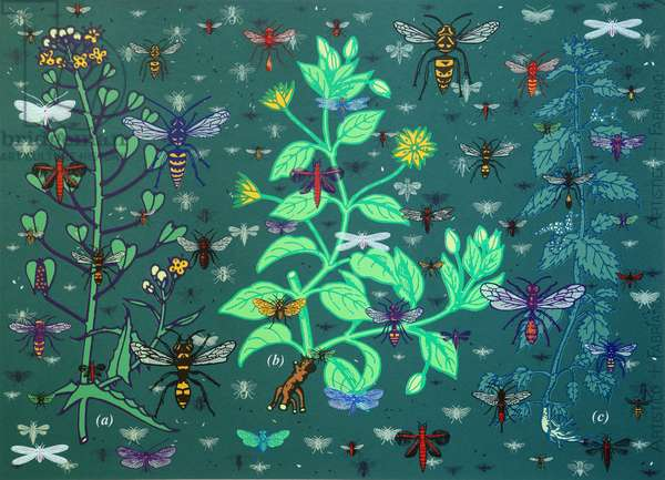 Plants and Bugs,2013, (screen print)