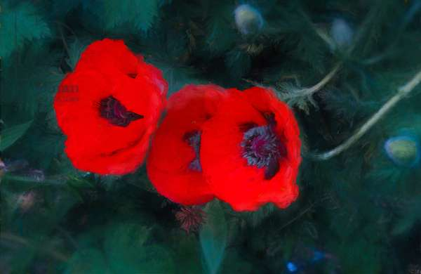 Three Poppies of Scarlet, 2018, (mixed media)