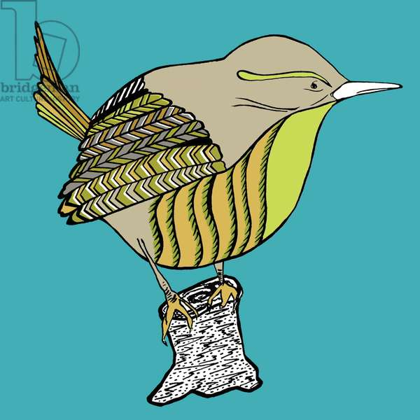 Woody Wren, pen and ink, digitally coloured