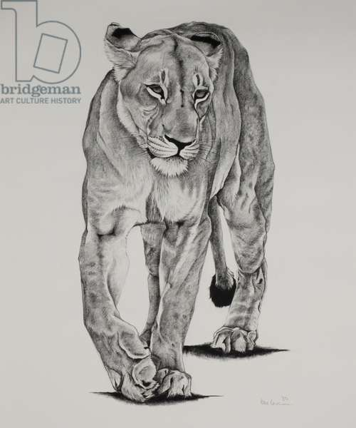 Pride Matriarch, 2005, (Charcoal on paper)